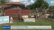 Стопаните на убитите животни се готвят за протест в София