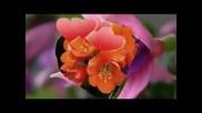 Цветница - най хубавият празник!