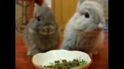 Сладки Зайчета - Черно И Бяло !