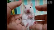 Много сладка бяла мишка