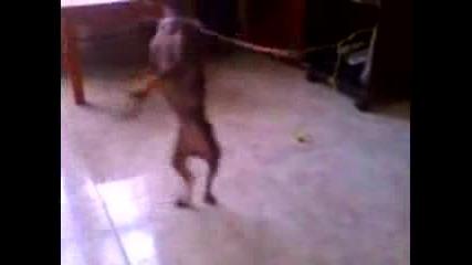 Смях куче играе