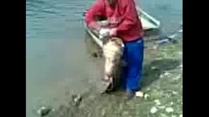 нариба с даката