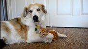 Приятелство между куче и котенце