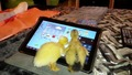 Две малки патета играят на Ipad!