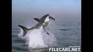 Акула Хваща Тюлен (Забавен Кадър)