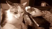Коте и досаден папагал