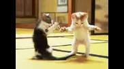 (r) (r) Cat - 001a. (1)