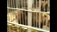 Българската национална телевизия Бнт Да Спасим Зоопарка В Кюстендил