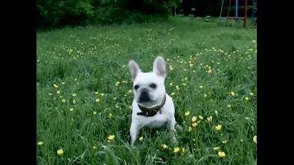 Куче което наистина се усмихва !?!