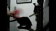 Тупане на килим ... а котка било :)
