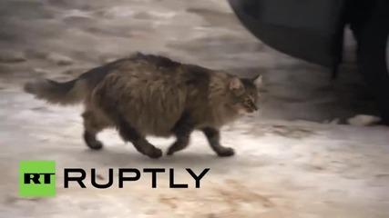 Котка спасява изоставено бебе