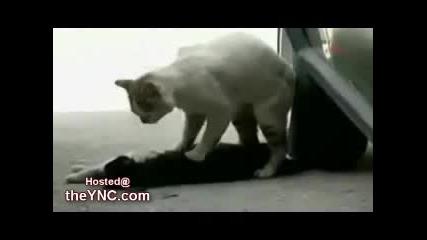 Котка се опитва да съживи мъртвите приятели на улицата (гледайте целия видеозапис)