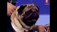 Пеещите кучета - Мопса Жорик в дует - Украйна търси талант