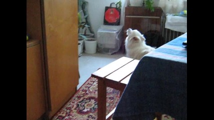 Куче пее, докато звъни телефон