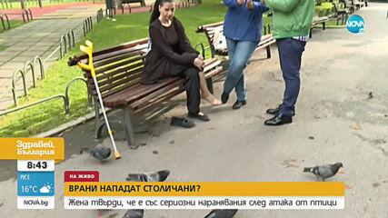 """""""Пълен абсурд"""": Жена твърди, че е със сериозни наранявания след атака от врани"""