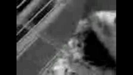 Морско Свинче - Снежко