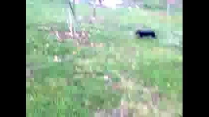 Видео0007