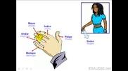 Урок По Испански За Частите На Тялото