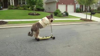 Куче кара тротинетка.