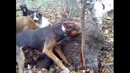 Лов в Каракуз 27 см, глиги