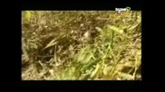 Бинди Ъруин - Snake in the grass