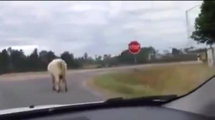 Смях ... Да те поздрави крава !!!