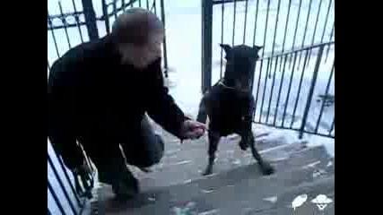 Куче ходи на два крака