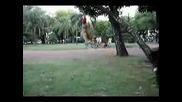 The Best Pit Bull Video Ever.avi