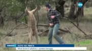 Бой между човек и кенгуру стана хит в социалните мрежи (ВИДЕО)