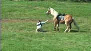 Непослушни коне - инциденти по време на конна езда