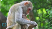 'Monkeygate' Hits Florida, Breeding Farms Face Investigation
