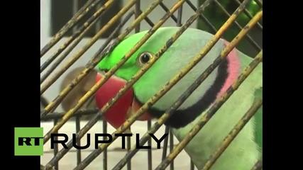 Индия: Неприличният папагал Хариял беше задържан от полицията за обида на възрастни жени