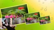 Даровете от природата - Цвете