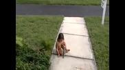 Тъпо дете + умряла катеричка = ???