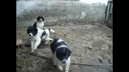 малки кученца - Бок, , , ,