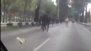 Избягали полицейски коне създават паника по улиците в Мексико Сити