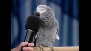 Говорещ Папагал