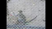Маймунката В Градската Градина В Сливен