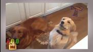 Глупави кучета! Сладки и забавни кучета! Dog Fail compilation