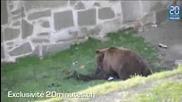 Мечка напада човек, Няма отърване !