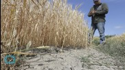 California Orders Large Water Cuts for Farmers