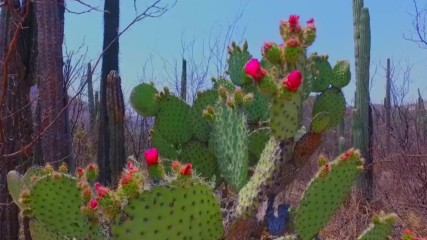 Уникални екосистеми в Мексико (