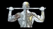 Упражнения за ръце,  гърди и гръб