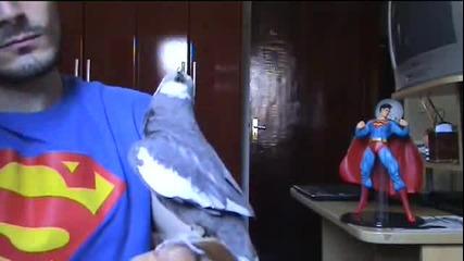 Папагал пее супер Марио.