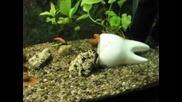 моят разнобразен аквариом