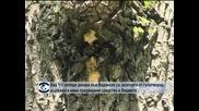 Над 111 хиляди декара във Видинско са засегнати от гъботворка, държавата няма предвидени средства в бюджета