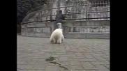 Симпатично Бяло Мече - Мечешки  Сънища