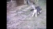 Забавно  малко  кученце си играе