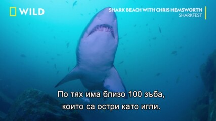 Крис Хелмсуърт плува с акули | Фестивал на акулите | NG Wild Bulgaria