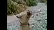 Смях !!! Бедуин Танцува Хип Хоп !!! Няма Такава Простотия !!!